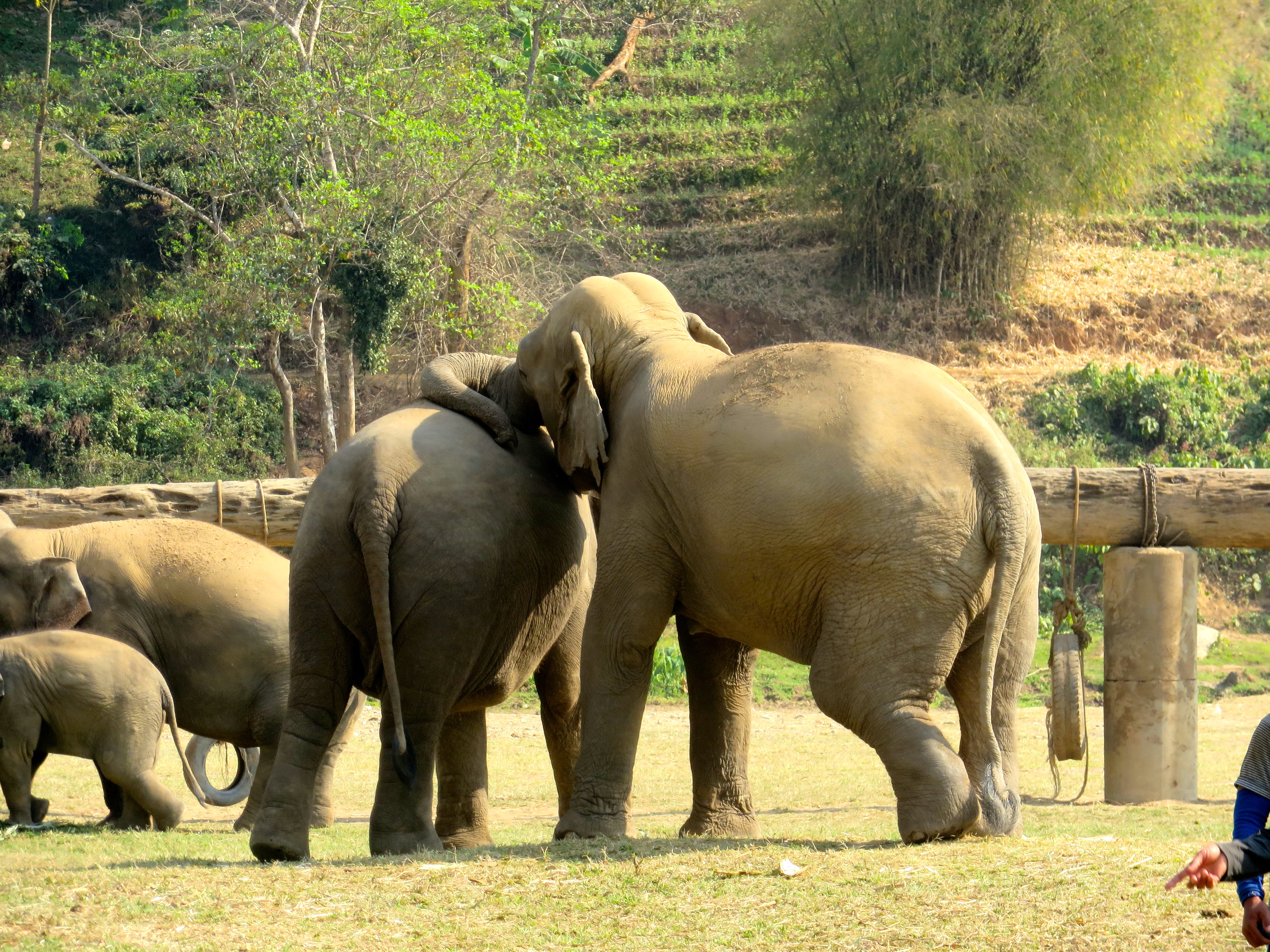 Watch How to Ride an Elephant video